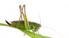 Don't Fear Crickets