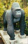 An 800 LB Gorilla